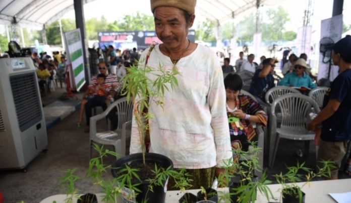 Cannabis Legalization: Thailand Celebrates Marijuana For Medical Purposes