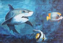 The white shark has the terror of the killer whale