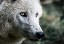 Artificial intelligence goes on the hunt for Wall Street wolves