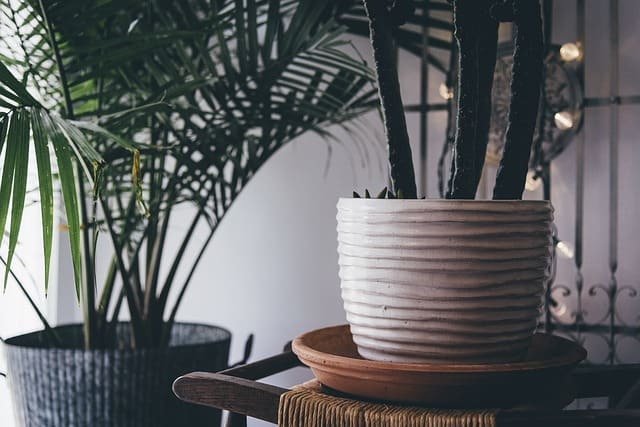 Indoor plants denied the ability to clean the air