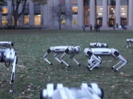 Mini Cheetah robots playing football and doing a synchronized back-flip