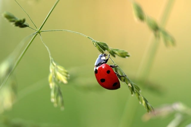 Over 10 years, two-thirds of insects disappeared from the meadows of Germany