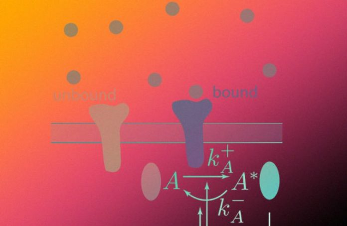 Physicists assessed cell sensitivity to rapid and weak fluctuations in irritants concentration
