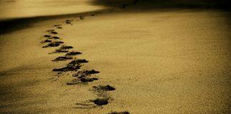 Radar helped scientists investigate mammoth tracks