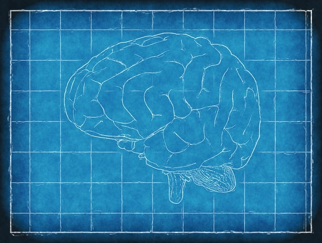 Scientists find new violations that pass through the prefrontal and parietal cortex