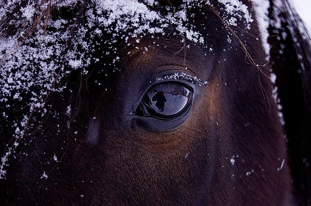 Stress caused horses to blink less and twitch their eyelids more often