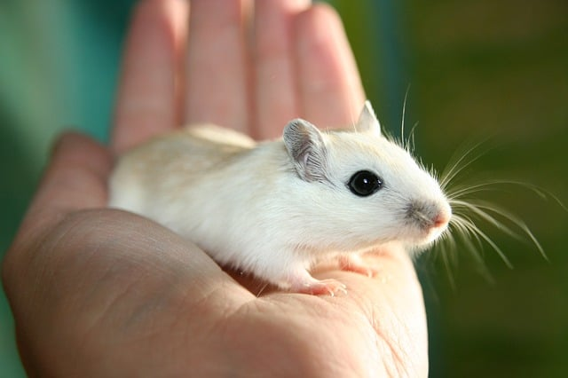 Two genes saved mice from four age-related diseases