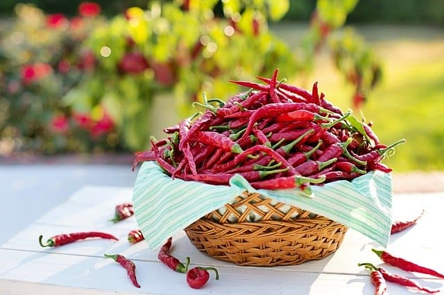 Chili peppers can extend the life of females by 15 per cent: Study