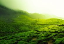 Ongoing Protests in Assam affects the life of Tea growers