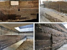 The 'Ikea' of the Romans: how the timber trade forged the greatest empire