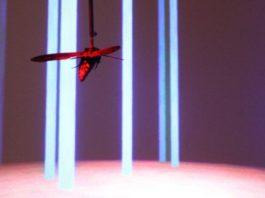 Moth flight paths improve drone navigation