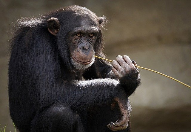 New Year brings Fire at German zoo in Krefeld - all animals in the monkey house died