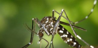 Science already knows how mosquitoes find us to bite us