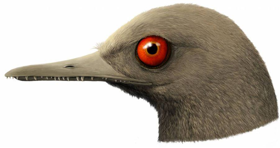 Artist's rendering of the dinosaur-bird that lived 99 million years ago. HAN Zhixin