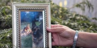 Buddy, the first dog infected by Covid-19 in the United States, dies